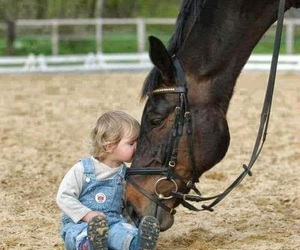 horse, baby, and kids image