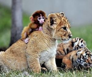 animal, monkey, and lion image