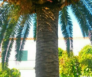 palms, summer, and travel image