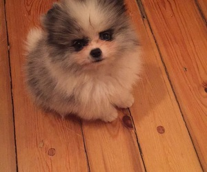 adorable, fluffy, and lulu image