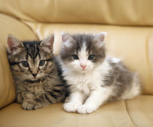 cats, kitten, and animals image