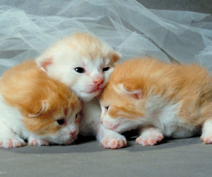 cats, animals, and kittens image