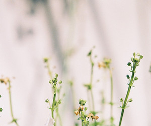 flower, plants, and flowers image