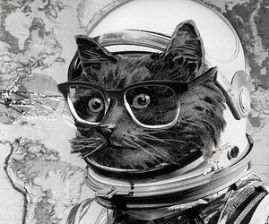 cat, eugenia loli, and cats image