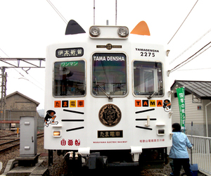 train, japan, and cat image