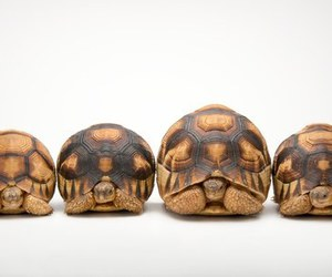 baby animals, cute animals, and tortoise image