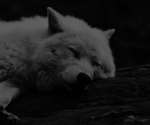 wild, wolves, and woods image
