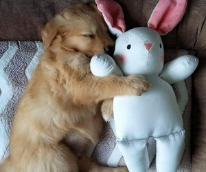 animal, bunny, and golden image