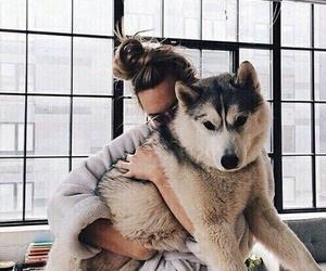 dog, girl, and husky image