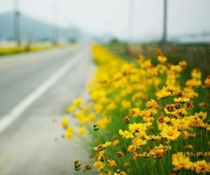 daisy, flowers, and yellow daisy image