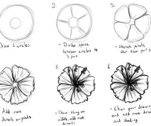 flowers, drawing, and draw image