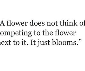flowers, inspirational, and inspire image