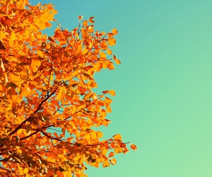 tree, leaves, and autumn image