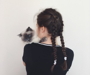 cat, darling, and inspiration image