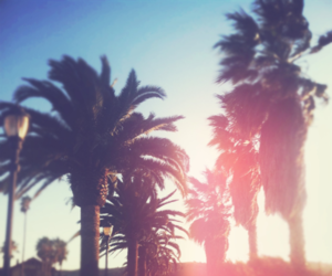 summer, sun, and palms image