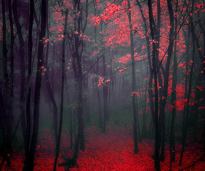 red, forest, and tree image