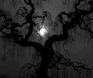dark, tree, and moon image