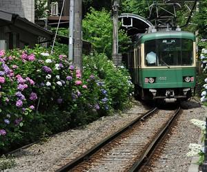 hydrangea and train image