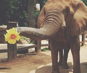 elephant, flowers, and animal image