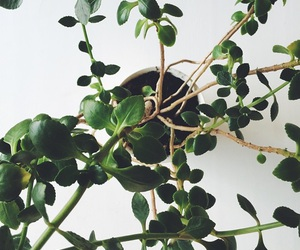 nature and plant image