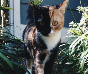 animal, cat, and cute cat image