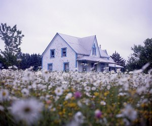 flowers, grunge, and house image
