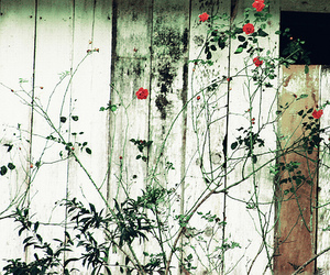 flowers, red, and weathered image
