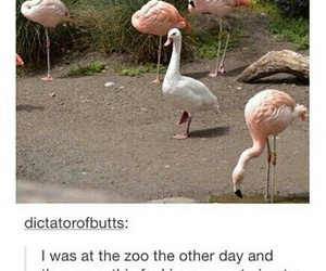 funny, goose, and lol image