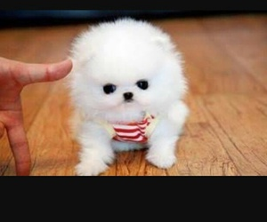 adorable and puppy image