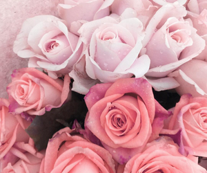 pink, flowers, and beautiful image