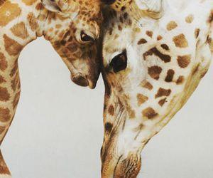 animals and Girafe image