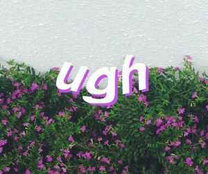 wallpaper, flowers, and ugh image