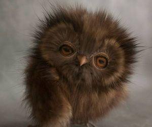 owl, bird, and cute image