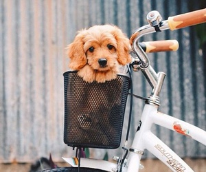 bike, little, and dog image
