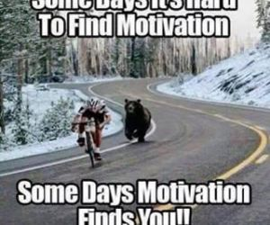 funny, motivation, and bear image