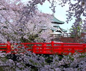beautiful, bridge, and cherry blossoms image