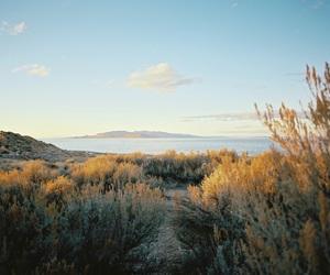 green, nature, and sea image