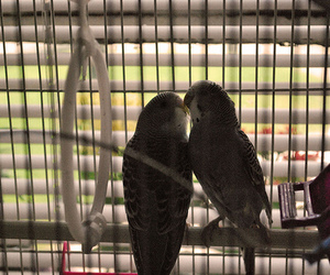 adorable, birds, and cage image