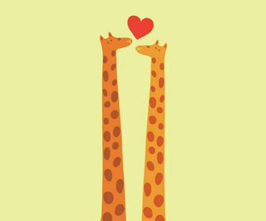 love and giraffes image