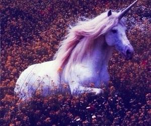 unicorn and flowers image
