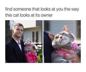 adorable, cat, and comedy image