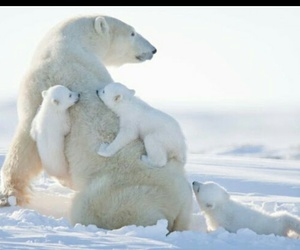 animals, bears, and baby animals image