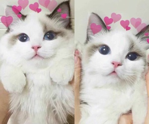 cat, cute, and hearts image