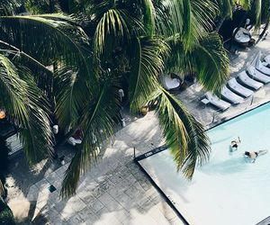 pool, summer, and palm trees image