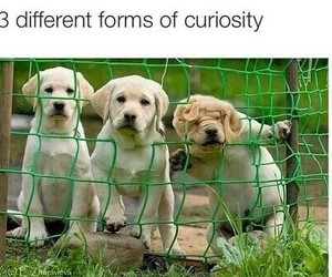 dog, funny, and curiosity image