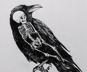 skeleton, crow, and art image