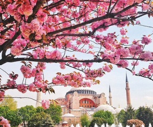 beautiful, flowers, and mosque image
