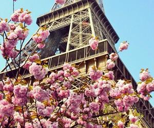 france, paris, and blossom image