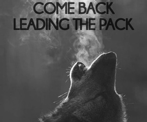 wolf, quotes, and pack image