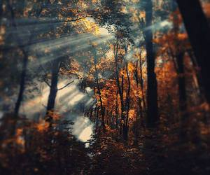 autumn, nature, and forest image
